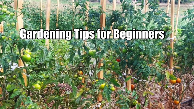 Here are 2 Ways to Avoid Using Pesticides and Commercial Fertilizer Forever - To truly help your garden thrive, and to avoid using pesticides and commercial fertilizer, here are 2 ways to achieve this by tapping into the environmentally friendly system of beneficial insects and companion planting.